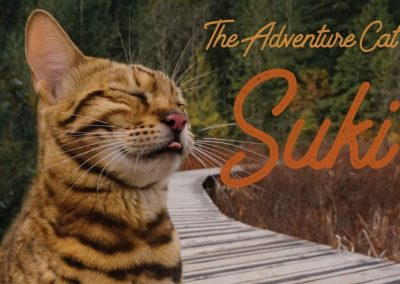 Suki the Adventure Cat 2020 Calendar – All rights SOLD to Andrews McMeel Publishing